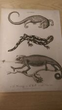 Lacerta: The Salamander, Plate IV: Encyclopaedia Londinensis V.12