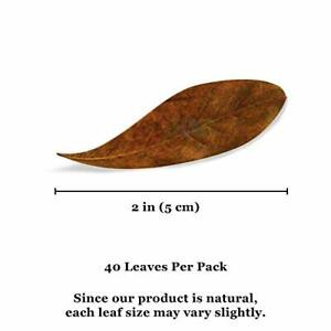 40 Pack Catappa indian almond leaves ketapang leaf shrimp betta fish aquarium