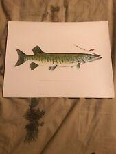 "1904-1906 RARE Antique DENTON FISH Print MASKALONGE ""musky"""