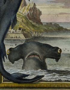 HAMMERHEAD SHARKS ORIGINAL RARE COPPERPLATE ENGRAVING 1735 SCHEUCHZER BIBLE