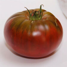 Tomate Noire de Crimée - Sachet de x20 graines (🌿 culture BIO) seeds seed