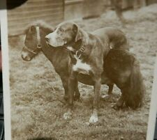 More details for edinburgh miniature pony and dog  type ?? 1909 creased bottom corners