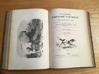 """encyclopédie d'histoire naturelle   """"les carnassiers""""  buffon , lacépède"""
