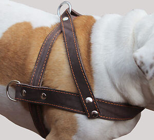 "Genuine Leather Dog Pulling Harness 1.5"" wide 31""-35"" chest PitBull Rottweiler"