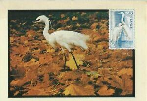 Card Postal CEF 1er Day France Protection of The Nature L' Egret 1975
