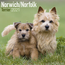 Norwich Norfolk Terrier 2021 Dog Breed Calendar 15% OFF MULTI ORDERS!