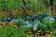 Kräuter als Schädlingsabwehr biologischer Pflanzenschutz Samen zum Aussuchen