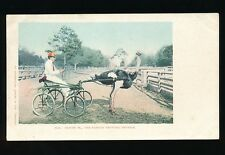 Birds OSTRICH Oliver W The Famous Trotting Ostrich USA c1902 u/b PPC