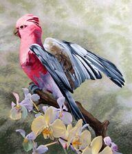 Dallas John Galah Cockatoo Tropical Bird Hand Signed Fine Art Serigraph OBO