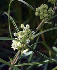 Asclepias stenophylla Slimleaf milkweed 10 seeds FREE SHIPPING