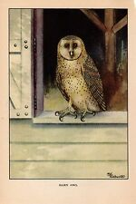 """1926 Vintage TODHUNTER BIRDS """"BARN OWL"""" STUNNING 90 YEARS OLD Color Lithograph"""