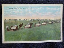 1920's Cutting Kentucky Blue Grass at Winchester, KY Kentucky PC