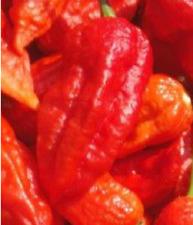 BHUT JOLOKIA NAGA record  de picante 30 semillas chili