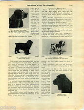 1930 Book Plate Print Cocker Spaniel Ivador Lucky Star Whoopee Pinbrook Scamp
