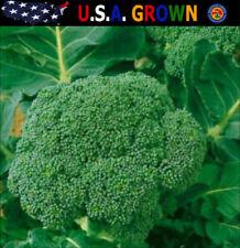 Broccoli Seeds Certified Organic (250 Seeds) Waltham Heirloom Gardening