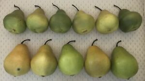 Pears, Pears, Pears! Artificial Ones, Faux, Fake Fruit - Set of 11 - Lifelike!