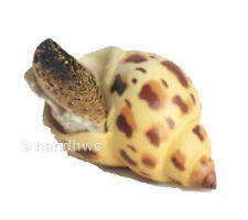 FREE SHIPPING | AAA 95833 Japanese Spotted Babylon Snail Model - New in Package
