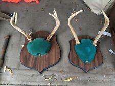 New listing 2 Buck Mounted On Plaque Deer Antlers very nice