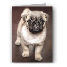 Pug Puppy Greeting Card - Dog