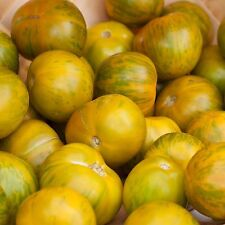 """Tomato """"Green Zebra"""" Spectacular Flavor SWEET AND TANGY Unique Color FOR SALADS"""