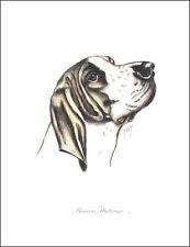 BRACCO ITALIANO DOG FINE ART PRINT ENGRAVING ITALIAN