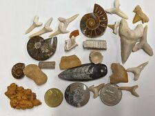 FOSSIL COLLECTION - Dinosaur Ammonite Shark Snake Stingray Orthoceras (#U361)