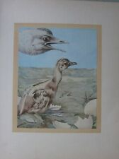 More details for beautiful baby bird print ~ the rhea