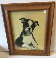Boston Terrier Antique Framed Print