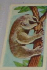 #2 slow loris card