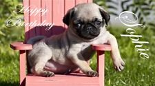 Personalised PUG DOG A5 Birthday card anyNAMEage greeting occasion