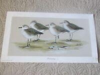 Sanderlings by Art Lamay