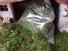 Krippenzubehör - Moos (grün) - Naturprodukt  zum Basteln !!!
