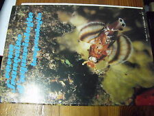 µ? Revue Française d'Aquariologie n°4 1988 Platax Batavianus Cirrhilabrus ...