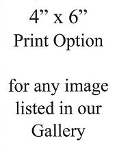 "4"" x 6"" Print Option"