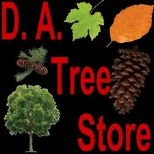 New listing Korean Mountain Ash 100 seeds. trees, seeds