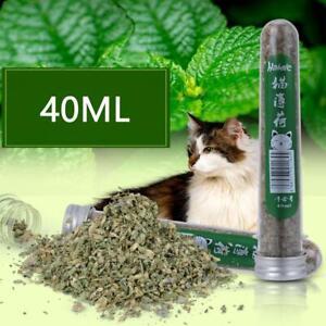 40ML Fresh Organic Dried Catnip Nepeta cataria Leaf & Flower Herb Bulk Top hot.