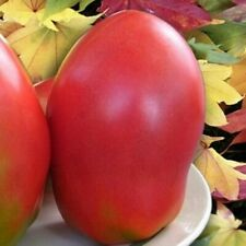 Red Giant Tomato Seeds Bezrazmernyy Dimensionless Natural Heirloom