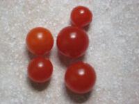 Tomate Johannisbeertomate, Currant Red, Wildtomate, Hoher Ertrag, Tomatensamen