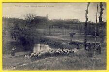 cpa 31 PIBRAC (Hte Garonne) Ste GERMAINE  Paysanne Moutons Traversant le COURBET