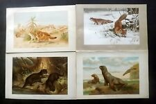 Richard Lydekker 1896 Lot of 6 Antique Natural History Prints. Book Plates
