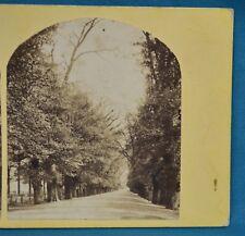 1860s Stereoview Photo Oxford University Broad Walk Christ Church Meadows