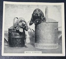 Spaniel Puppies in Watering Cans     Original 1930's Vintage Photo Card # VGC