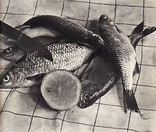 "Dumas-Satigny - Nature morte aux poissons - Photogravure in  "" AMG 1937 """