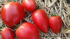 10+ AMISH PASTE rot fleischig tolles Aroma prima Pastatomate alte Sorte USA