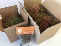 S-P Seafoam Trees -Model Scenery Railway Forest Wargames Foliage Sea Foam OO N O