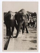 PHOTO PRESSE Éléphant Vague de chaleur à Paris Soif 1942 Cirque Eau Boire
