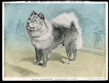 """CHOW CHOW CHINESE DOG ANTIQUE ART PRINT ENGRAVING """"Singapore Boy"""" by R H Moore"""