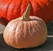 Pumpkin AUSTRALIAN BUTTER-Pumpkin Seeds-RARE LOCAL HEIRLOOM-15 SEEDS
