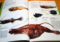 Deep Sea Fishes - Monsters of Underworld Book from Japan Japanese fish #1135