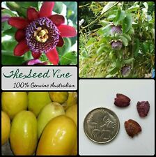 10+ GIANT GRANADILLA SEEDS (Passiflora quadrangularis) Passionfruit Flower Vine